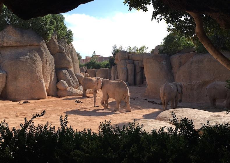 слоны на прогулке в Биопарке
