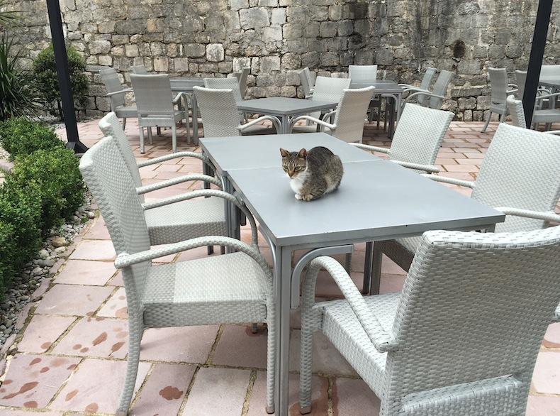 Кошкам в Которе - раздолье