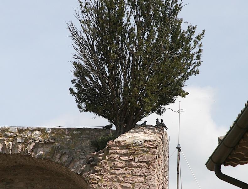 Проповедь птицам / потомки птиц, которым проповедовал св. Франциск