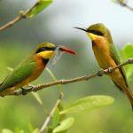 Идея для отпуска: купаться и наблюдать за птицами в Гамбии