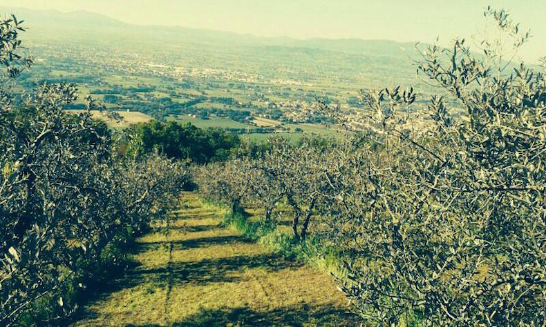 оливковые рощи в Спелло хозяйства Frantoio di Spello