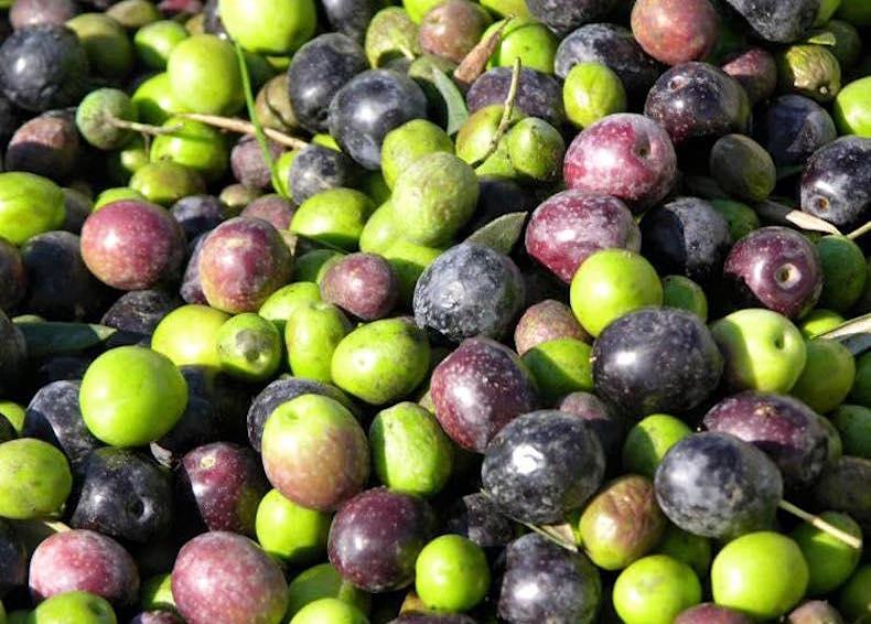 цветные оливки Спелло