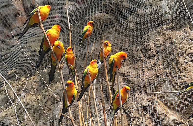 в клетку к попугаям разрешено заходить. Бенидорм Mundomar