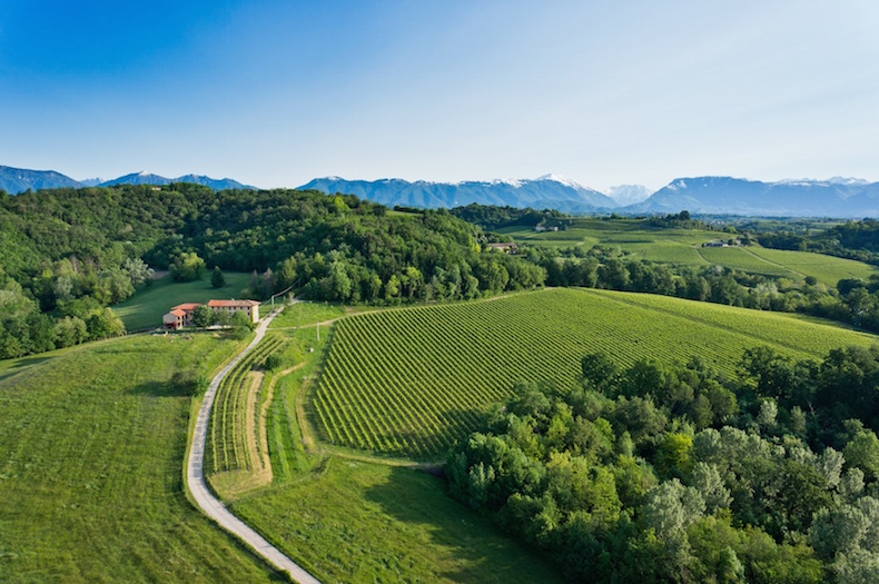 виноградники и остерия семьи Коллальто