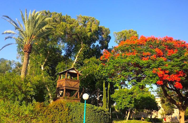цветущий сад кибуца Sha'ar HaGolan