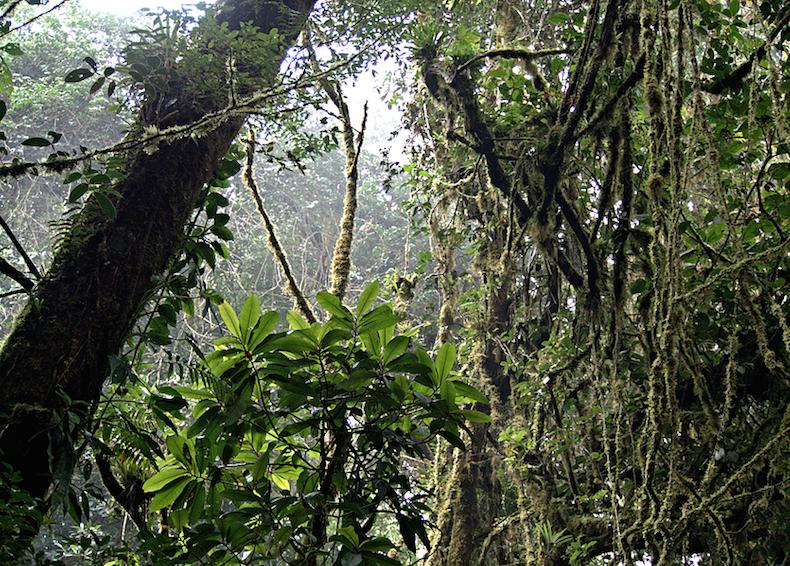Монтеверде (Monteverde)