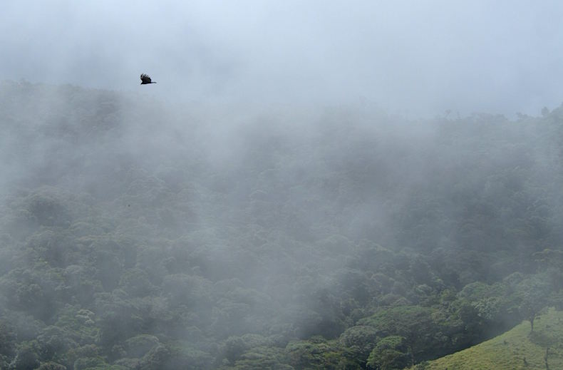 Туман, Коста-Рика