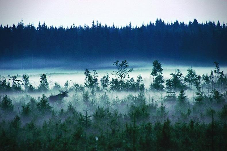 экологический поселок Kolarbyn Ecolodge