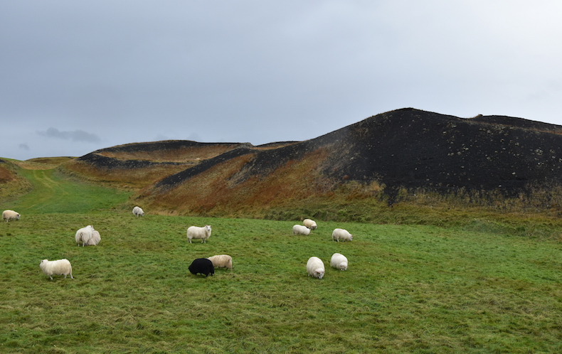 озеро Миватн кратеры в местечке Скутустадир (Skútustaðir)
