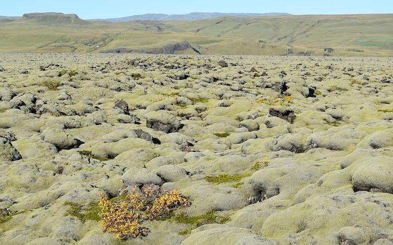 исландский мох
