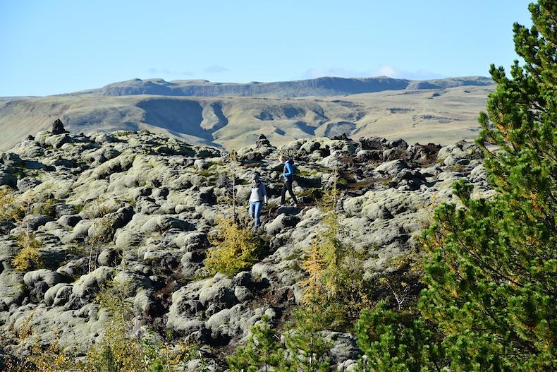 моховые поля в окрестностях деревни Вик, Исландия, пейзажи, мох, исландский мох