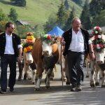 Праздник спуска коров с гор в швейцарском Шато д'Э