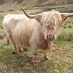 Алладель — заповедник в шотландском Нагорье