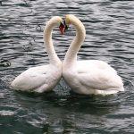 Love and the city: Лозанна. Чем заняться влюбленным парам в городе на берегу Женевского озера?