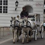 Бюджет на выходные в Вене: сколько денег вам понадобится