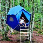 Если отели вам надоели: две новенькие бюджетные альтернативы отелям и airbnb