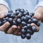 Как делают божоле-нуво и 12 любопытных фактов о французском молодом вине