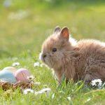 Пасхальные обычаи Европы родом из язычества: кролик, яйца и расстрел старухи