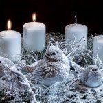 Наш адвент-календарь: 8-14 декабря