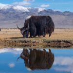Ради чего стоит ехать в Туву (Тыву): Кызыл, шаманы и Убсунурская котловина